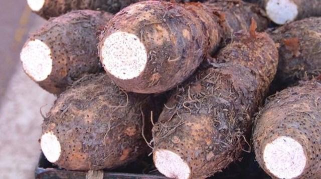 Củ khá giống khoai tây và phần bên trong màu trắng của thân dày.