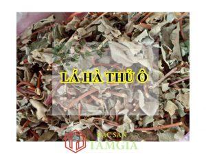 Mua lá hà thủ ô ở Đặc sản Tâm Gia để được đảm bảo chất lượng